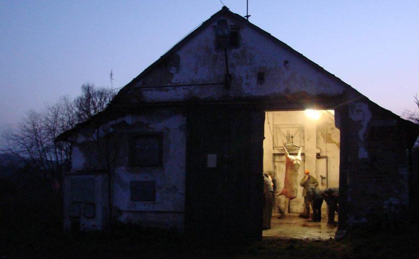 Spavka 2011